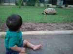 My Tortoise Neighbour