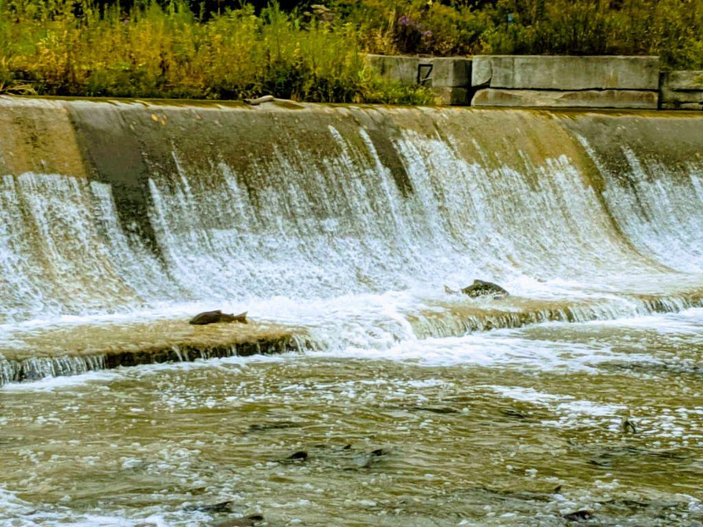Bowmanville Creek Fish Ladder